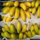 南投香蕉8台斤...