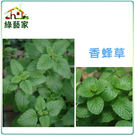 【綠藝家】K04.香蜂草種子100顆...
