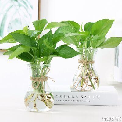 花瓶 創意簡約水培植物玻璃花瓶花盆透明風信子水養綠蘿 觀音竹插花瓶【快速出貨】