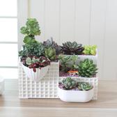 花盆歐式桌面多肉景觀組合花盆塑膠創意多肉盆辦公室迷你植物種植盆