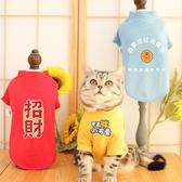 貓咪衣服防掉毛薄款英短藍貓