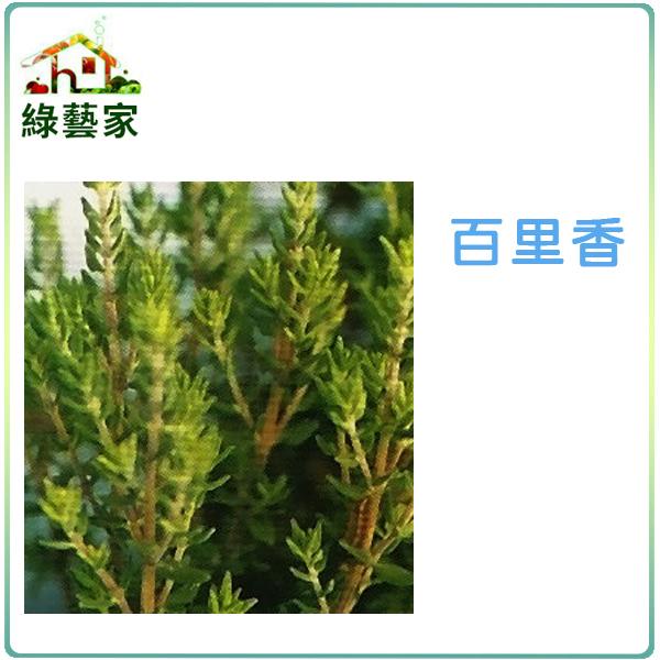 【綠藝家】K02.百里香種子200顆