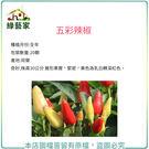 【綠藝家】P01.五彩辣椒種子20顆...