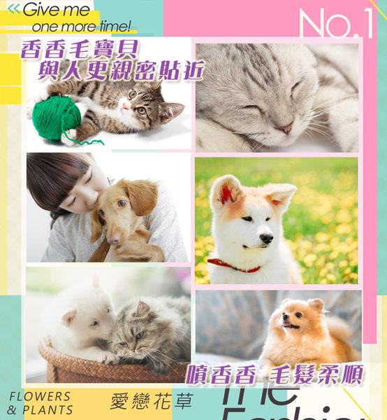 【愛戀花草】玫瑰精油 白毛亮澤寵物香水《100ML / 五瓶組》