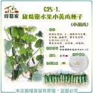 【綠藝家】G25-1.綠精靈水果小黃瓜種子3顆(小胡瓜)