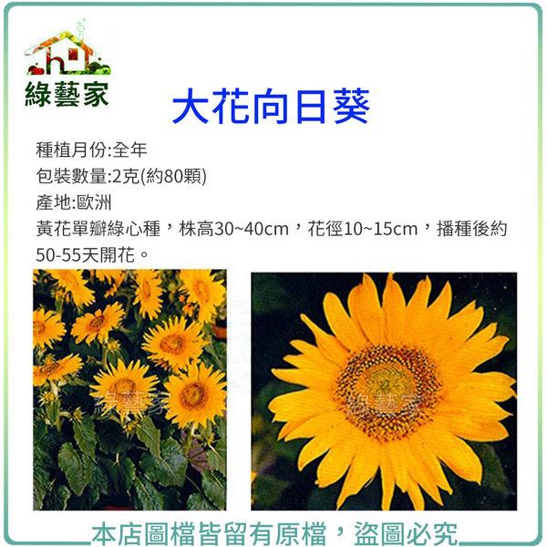 【綠藝家】大包裝H41.大花向日葵種子2克(約80顆)