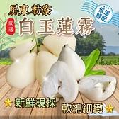 【南紡購物中心】屏東枋寮白玉蓮霧 中 3斤/盒(19~23顆)
