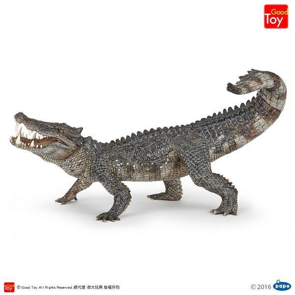 【Good Toy】法國 PAPO 55056 恐龍古生物 野豬鱷 Kaprosuchus