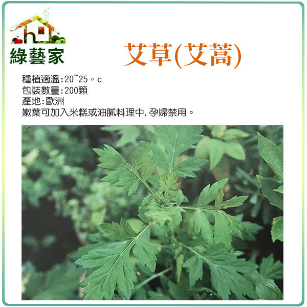 【綠藝家】K05.艾草(艾蒿)種子200顆