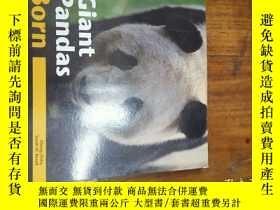 二手書博民逛書店giant罕見pandas born survivorsY271