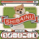 隨機4款一組【日本正版】柴犬 杯緣子 扭蛋 轉蛋 擺飾 杯緣裝飾 PUTITTO - 179046