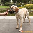 狗嘴套防咬防叫口罩保護套遛狗大中小型犬【小獅子】