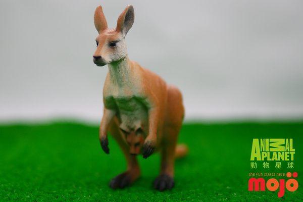 【Mojo Fun 動物星球】澳洲動物-袋鼠 387022