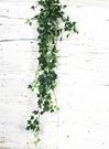 仿真 [1米 深綠色 常春藤假葉子束] ☆人造花.插花.居家.店面.櫥窗擺飾.婚禮佈置☆