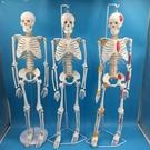 人骨骷髏仿真骨骼模型85CM人體骨骼帶椎間盤及神經模型85公分
