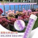 植物補光燈 多肉補光燈 家用上色全光譜LED蘭花卉蔬果育苗仿太陽植物生長燈 漫步雲端 免運