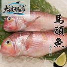 現流野生 馬頭魚 / 方頭魚 / 紅尾 ...