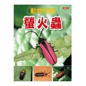 動物奇觀:螢火蟲