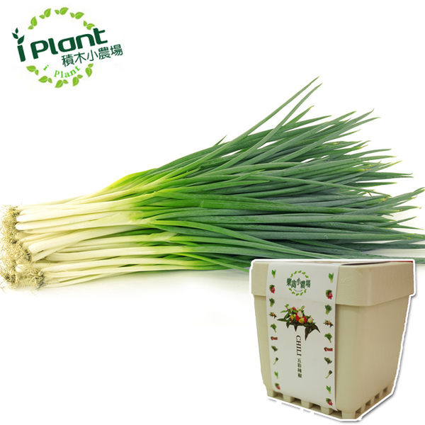 【 iPlant 積木小農場 - 青蔥 】多肉療鬱青菜香草種子植栽盆栽開心農場【心安購物】