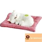 小寵物動物小布加菲小可愛貓咪偶公仔玩具毛絨睡覺小貓咪【小獅子】