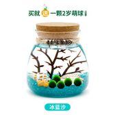 marimo幸福海藻球DIY生態瓶桌面水培微景觀好養綠色植物盆栽【限時八折】