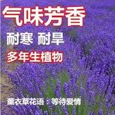 花卉種子 春天種的花種四季花卉薰衣草種孑開花不斷香草薰衣草花子種籽室外-凡屋