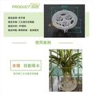 ⭐星星小舖⭐ 魚缸水植栽盆三孔透明 單孔透明 植栽盆【FI301】