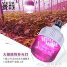 植物燈 貴翔 植物生長燈LED蘭花蔬菜大棚火龍果草莓仿陽光光合作用補光燈 阿薩布魯