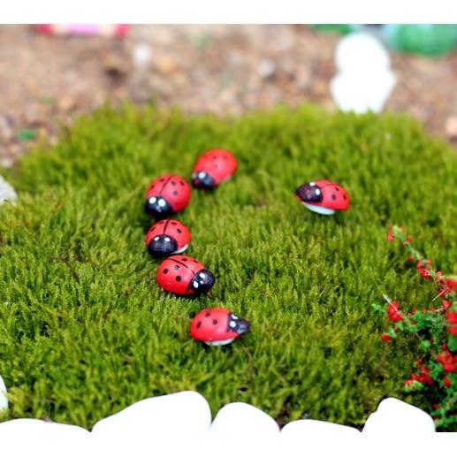 ⓒ瓢蟲微景觀 10隻一組 多肉植物創意微景觀【A014007】