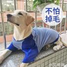 狗狗衣服春裝春秋薄款背心金毛防掉毛拉布拉多柯基中型大型犬純棉 小艾新品
