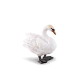 【永曄】collectA 柯雷塔A-英國高擬真動物模型-飛禽動物系列-天鵝