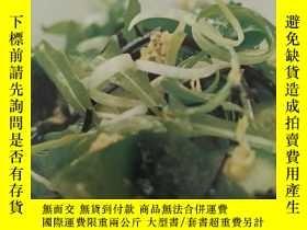 二手書博民逛書店farmer's罕見market 農夫的新鮮食物菜譜Y30664