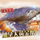 鮮凍加拿大黃金蟹【港點大師】...