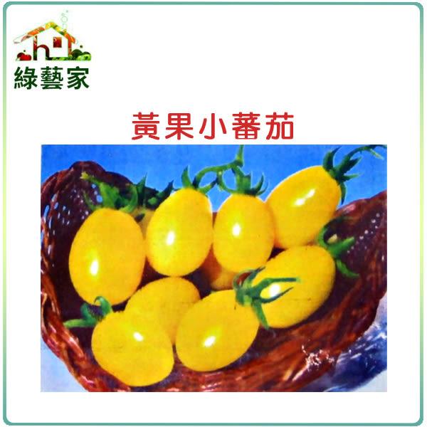 【綠藝家】G21.黃果小蕃茄種子10顆