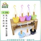 【綠藝家】4.5吋馬卡龍吊盆組 (含吊繩...