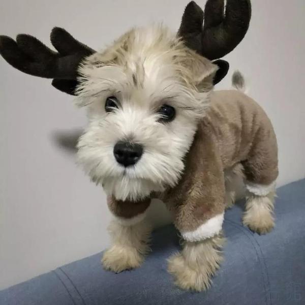 狗狗衣服秋冬裝加厚四腳衣變身幼犬小型犬寵物衣服【極簡生活】