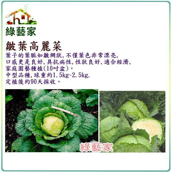 【綠藝家】B20皺葉高麗菜種子80顆