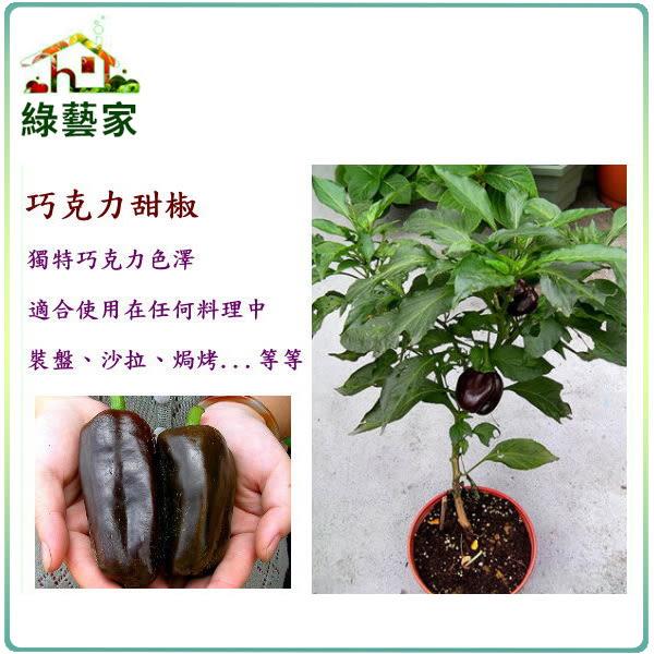 【綠藝家】大包裝G42.巧克力甜椒種子60顆