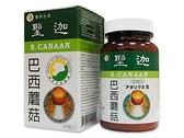 聖迦巴西蘑菇子實體膠囊(姬松茸)