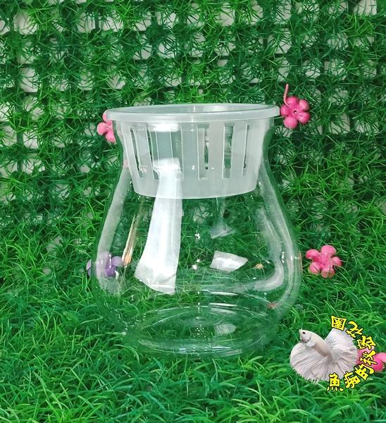 [小瓶狀透明水耕盆栽 水耕植物專用花器]植物可以另外加購 ☆居家.店面.櫥窗.玄關擺飾.園藝☆