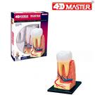 【4D Master】26061 立體拼組模型 人體解剖 教學系列 牙齒