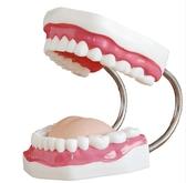 模型玩具 牙保健模型 大號口腔醫學護理刷牙指導 教學儀器牙列牙齒兒童 城市科技