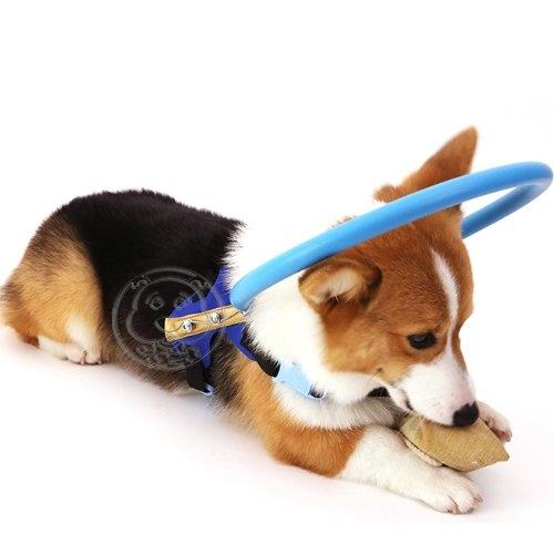 四個工作天出貨除了缺貨》dyy》狗狗失明寵物防撞圈瞎子狗貓防撞環白內障動物保護圈M