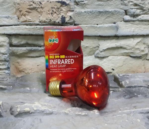 【西高地水族坊】卡西諾CACINO 紅外線夜光聚熱燈泡50W