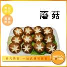 INPHIC-蘑菇模型  蘑菇料理 蘑菇洋菇 火鍋料-IMFK021104B