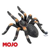 【Mojo Fun 動物星球頻道 獨家授權】紅膝蜘蛛 387213