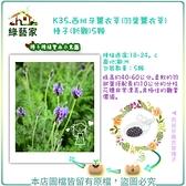 【綠藝家】K35.西班牙薰衣草(羽葉薰衣草)種子(新觀)5顆