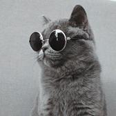 寵物狗狗貓咪墨鏡