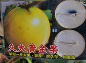 水果苗 ** 久大黃金果 ** 4吋盆/高40cm/果肉是牛奶白色【花花世界玫瑰園】S