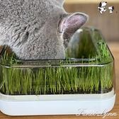 貓草碗盆栽貓咪喝水貓糧單碗斜口碗保護勁椎貓草種植套裝貓咪用品 范思蓮恩